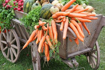 Traditioneller Bollerwagen für Gemüseernte