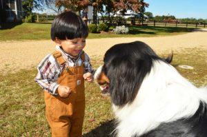 hund und bauernhof
